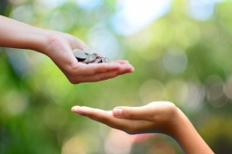CRM and Donor Management for Charities